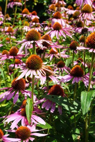 bemesting van uw tuin
