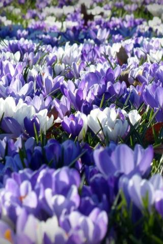Laat de lente maar komen!