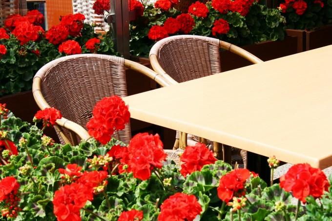 Geraniums, daar kun je ook voor gaan zitten!
