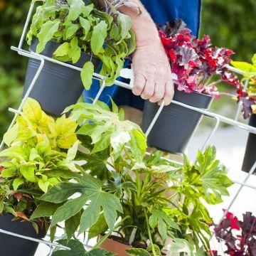 Maak je omgeving groener met planten in plantenrekken van gebogen betongaas!