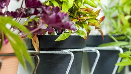 Plantenrekken