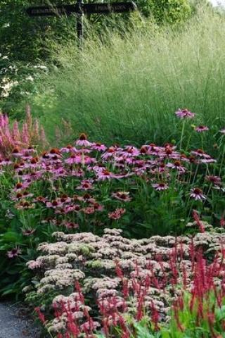 Aanpassen van beplanting in de tuin