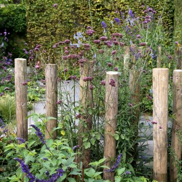 77 tips voor een onderhoudsvriendelijke tuin