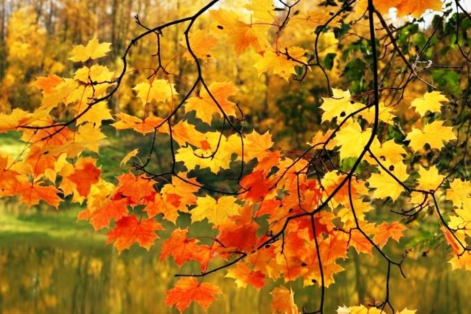 Laat de herfst maar komen...