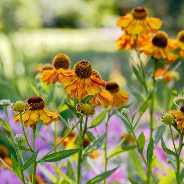 Hoe onderhoud ik mijn bloemenborder na een warme zomer?