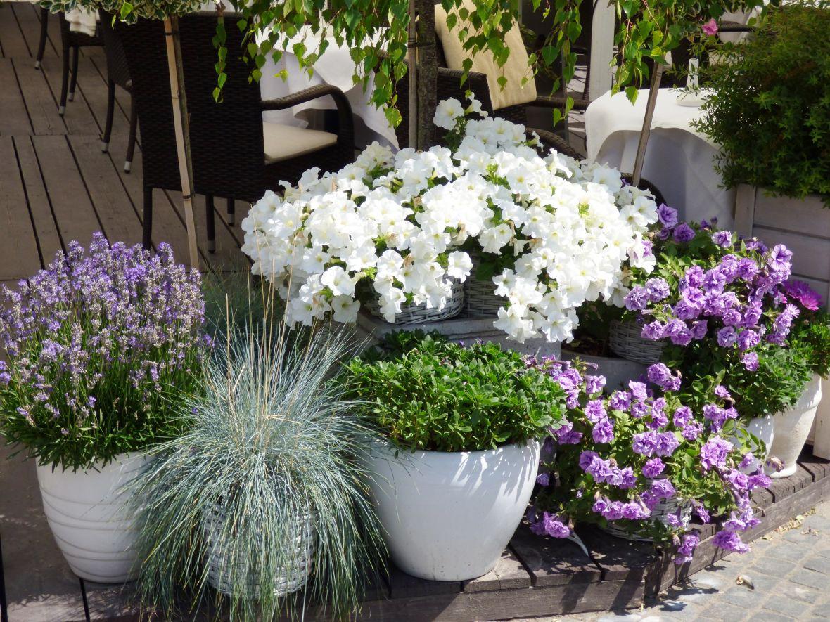 Kunststof Tuin Pot : Waarom zou je potten in je tuin toepassen? de tuinen van appeltern