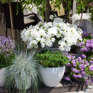 Waarom zou je potten in je tuin toepassen?