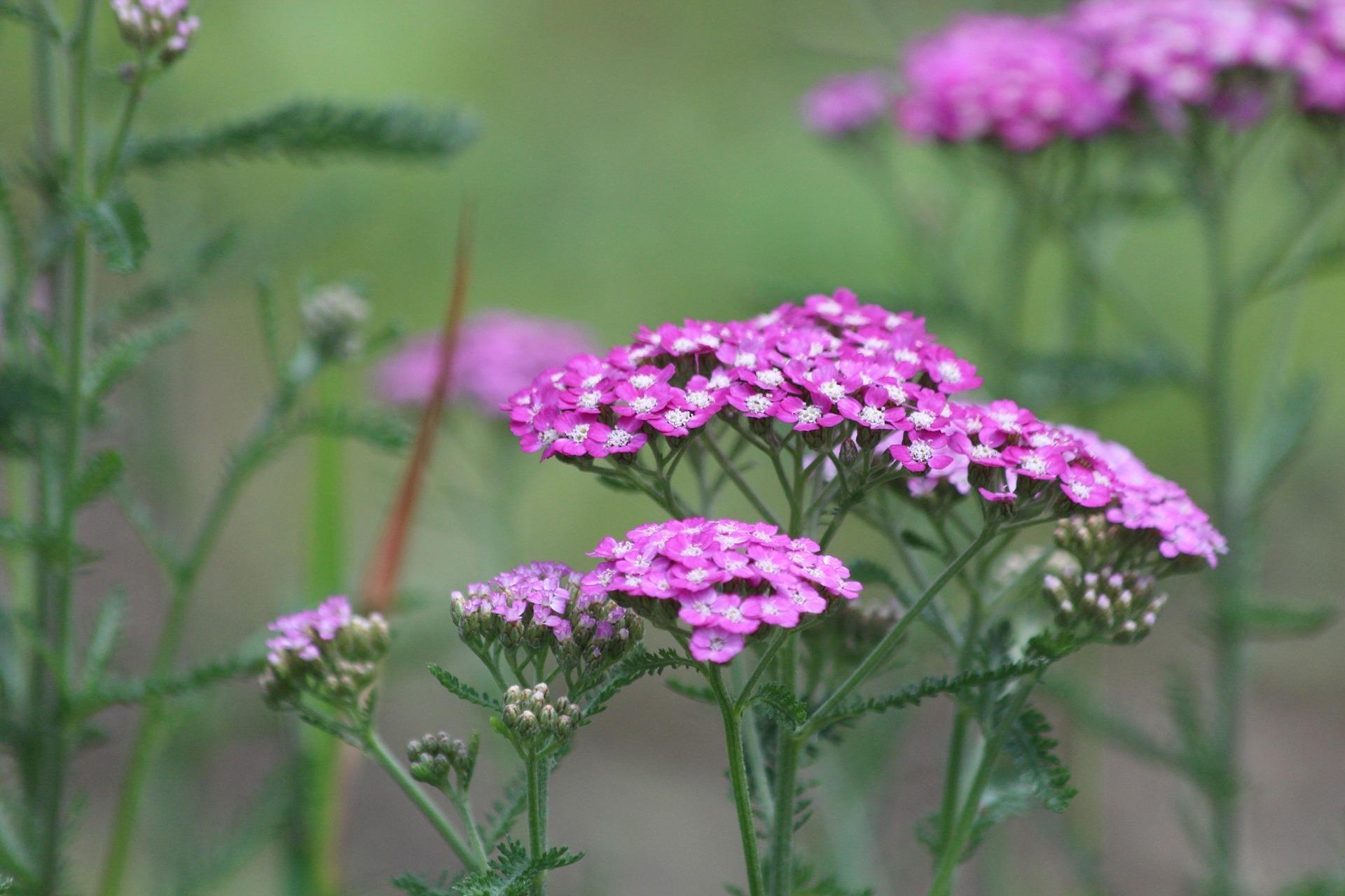 Verbazingwekkend Welke planten kunnen het best tegen droogte? | De Tuinen van Appeltern WF-49