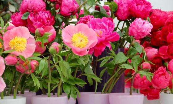 Pinksteren: De Tuinen van Appeltern zijn op beide dagen geopend!