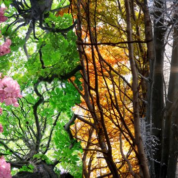 De tuin van vier seizoenen