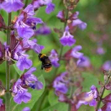 Wat moet je weten als je voor vaste planten kiest?