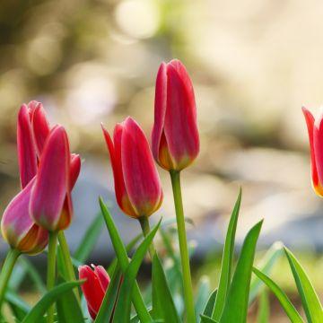 Hoe je vrolijk wordt van bloembollen!