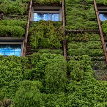 Is verticaal tuinieren de toekomst?