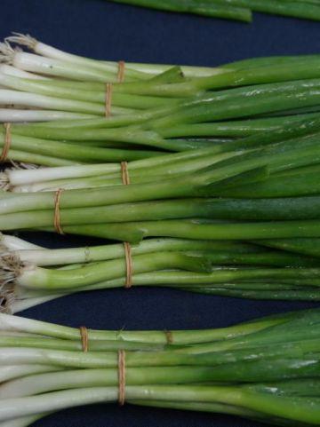 Allium fistulosum  - Stengelui , Lenteui