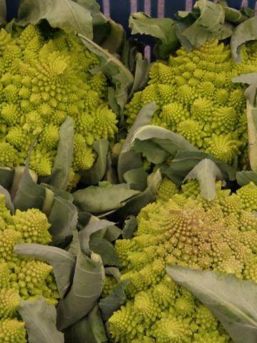 Brassica oleracea 'Romanesco' - Romanesco bloemkool