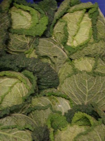 Brassica oleracea sabauda - Groene kool, savooikool