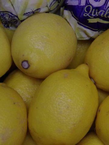 Citrus × meyeri  - Citroen