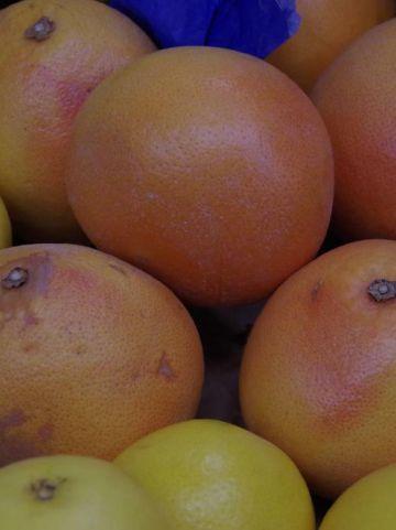 Citrus × paradisi  - Grapefruit