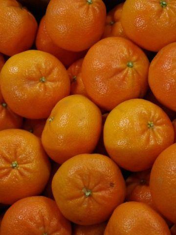 Citrus clementina  - Manderijn
