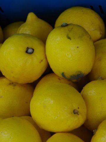 Citrus limon  - Citroen