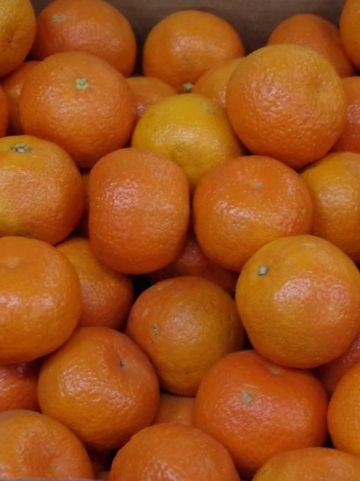 Citrus reticulata  - Manderijn