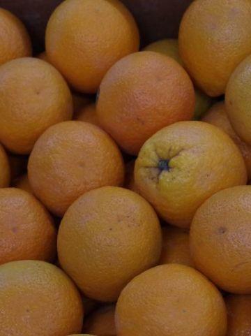 Citrus sinensis  - Sinaasappel