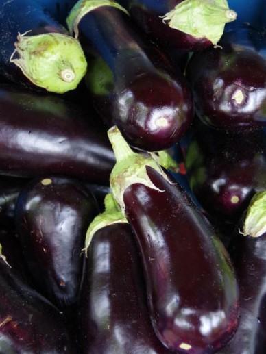 Solanum melongena  - Aubergine