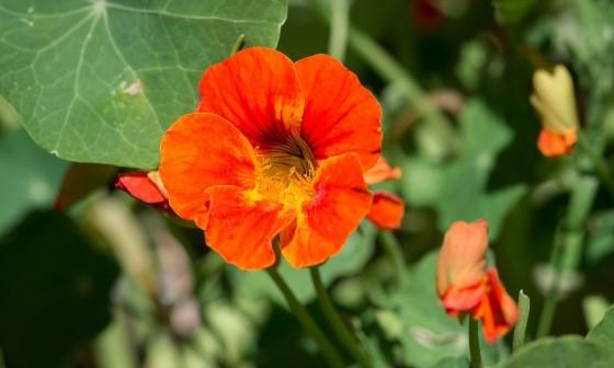 Zondagse picknick: Eetbare tuin