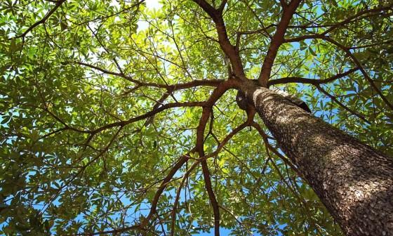 Zondagse picknick: Bomen en heesters
