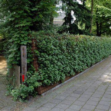 Op zoek naar een groene erfafscheiding die rust en privacy biedt?