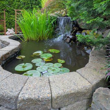 Hoe moet ik een gemetselde vijver waterdicht maken?