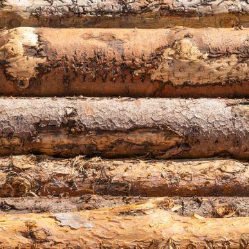 Over hout gesproken..