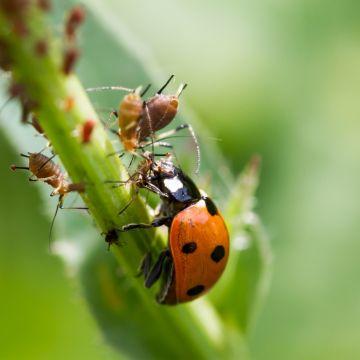 Beestjes tegen beestjes