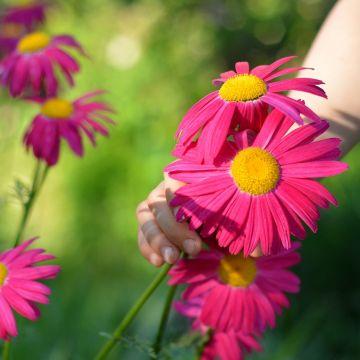 Blijven plukken uit eigen tuin