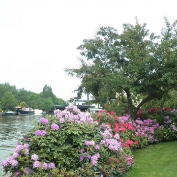 Een boeket van Rhododendrons