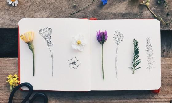 Workshop: Botanisch Tekenen door Leo Groenleer!