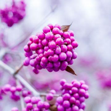 Een kleurrijke wintertuin