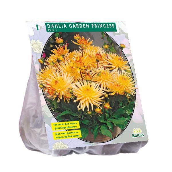 Dahlia Garden Princess (geel oranje park-, perkdahlia)