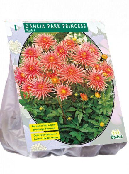 Dahlia Park Princess (roze, zalmroze park-, perkdahlia)