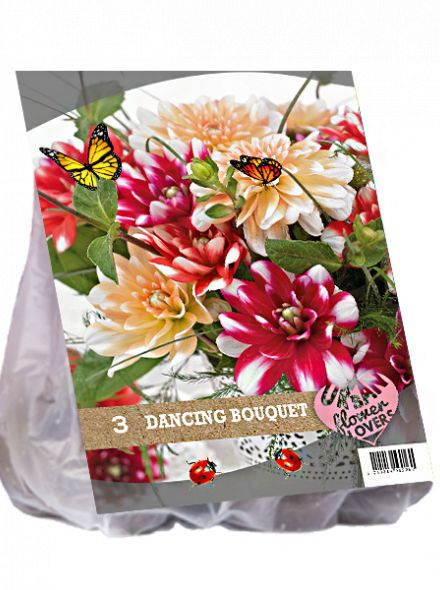 Dahlia mix - Dancing Bouquet per 3 (Urban Flowers serie)