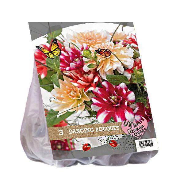 Dahlia mix - Dancing Bouquet per 3 (Urban Flowers serie)