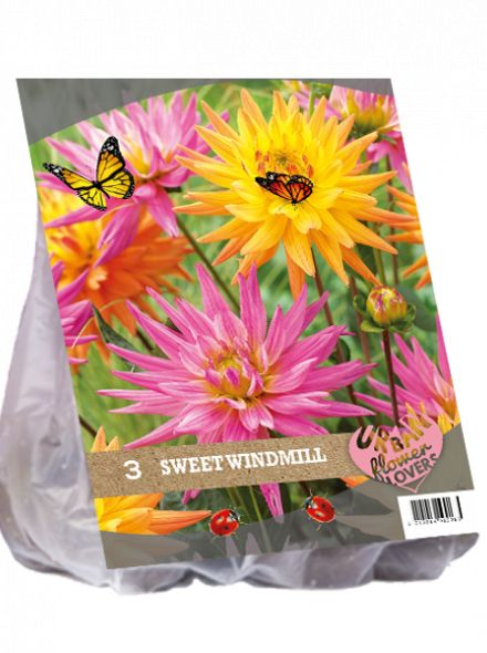Dahlia mix - Sweet Windmill per 3 (Urban Flowers serie)
