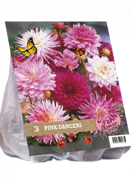 Dahlia mix - Pink Dancers per 3 (Urban Flowers serie)