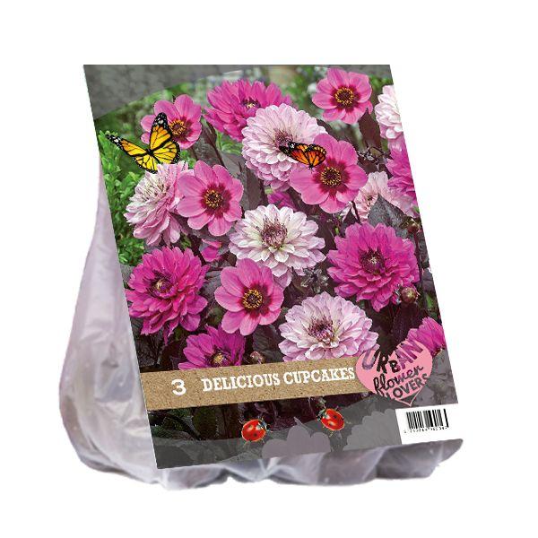 Dahlia mix - Delicious Cupcakes per 3 (Urban Flowers serie)