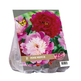 Dahlia mix - Pink Match per 2 (Urban Flowers serie)