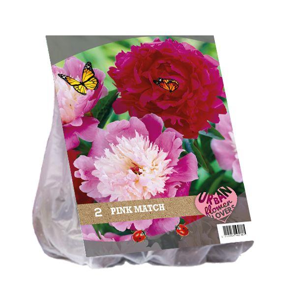Dahlia mix - Pink Match per 2 (Urban Flowers serie)