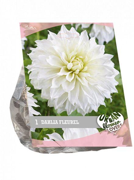 Dahlia Fleurel (wit, Urban Flowers serie)