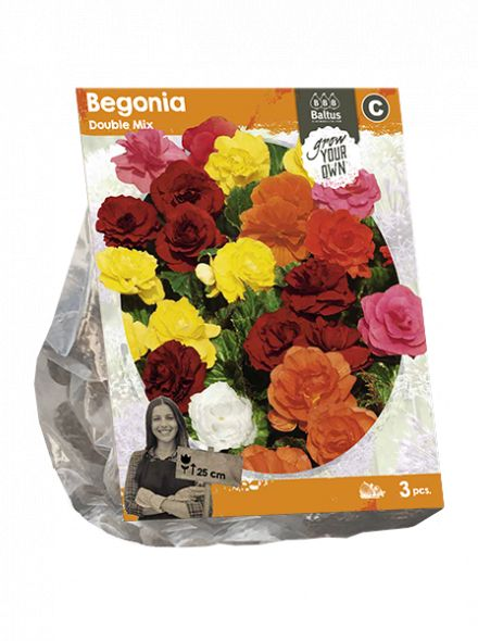 Begonia Double Mix