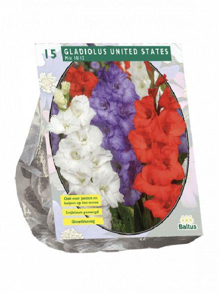 Gladiolus United States (gladiolen mix)