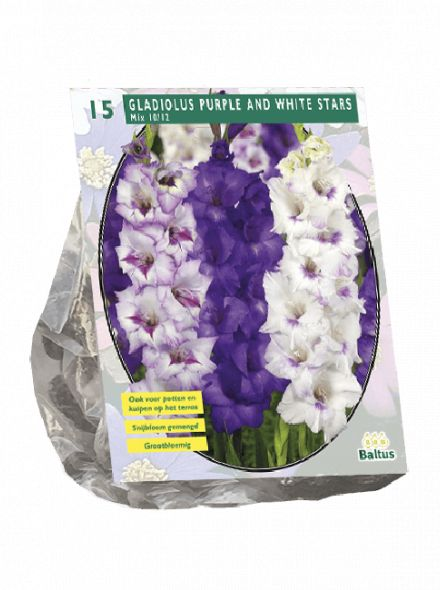 Gladiolus Purple and White Stars (gladiolen mix)